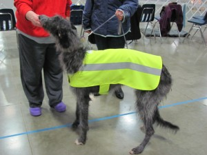 Safety Vest Picture_Large Dog