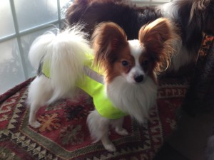 Safety Vest Picture_Small Dog
